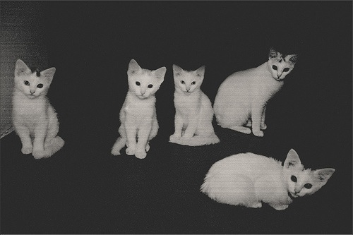 black, cat, cats, dark, sad, white, whitecat