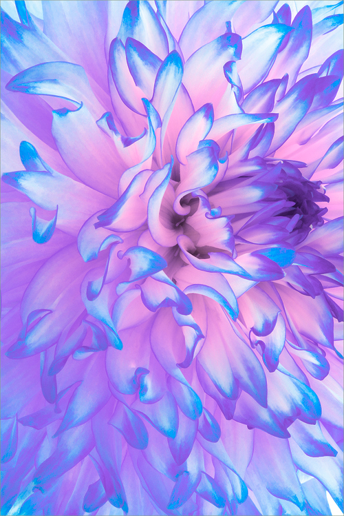 beautiful, colors, cool and flower