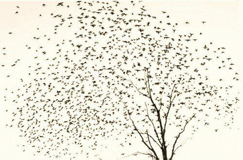 art, birds, black and white and draw