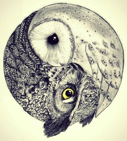 Facebook image 1797891 by maria d on for Cool drawings of owls