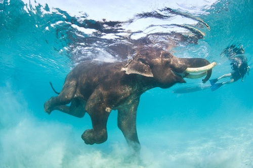 blue, diving, elephant and ocean