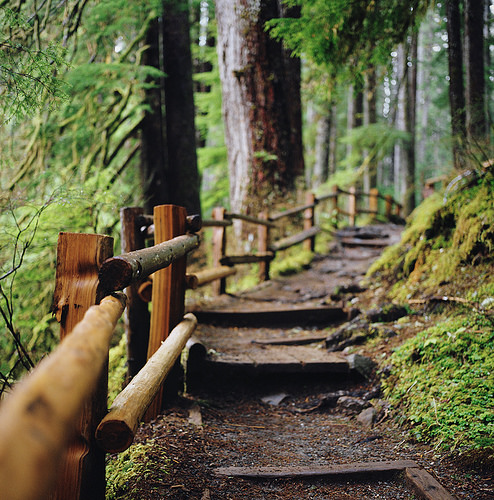 adventure, forest, moss, nature, trail, washington state, woods