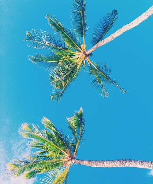 Group Of Palm Tree Wallpaper Tumblr Hipster