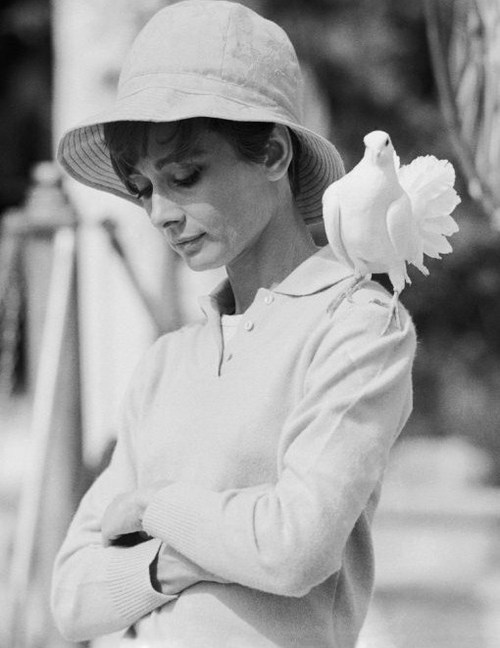actrice, audrey hepburn, black and white, film, hat, movie, retro, vintage, white dove, blanche colombe