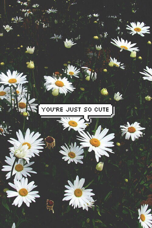 Pictures Of Flowers Background Tumblr With Quotes