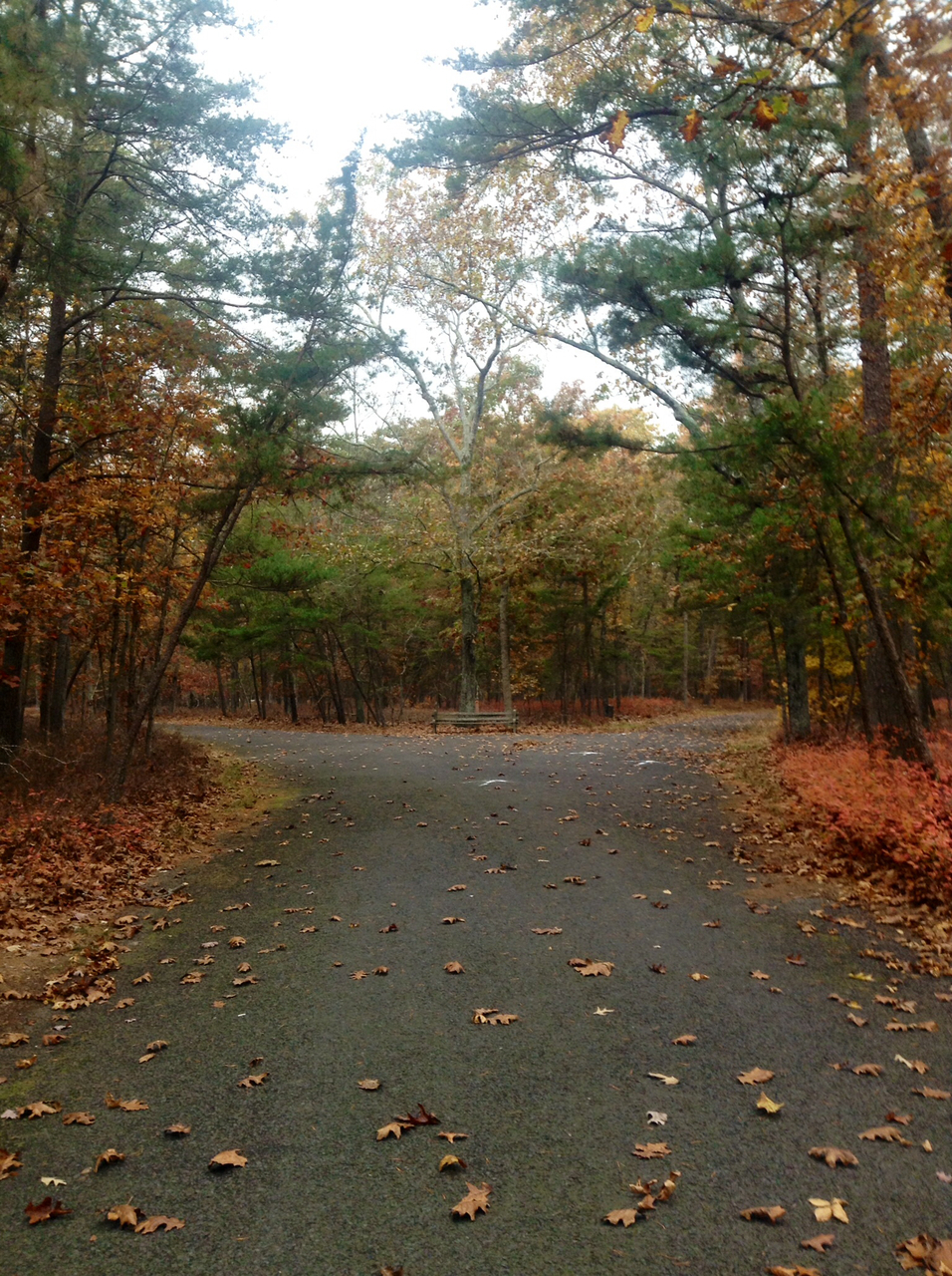 beautiful, bicycle, cycling and fall