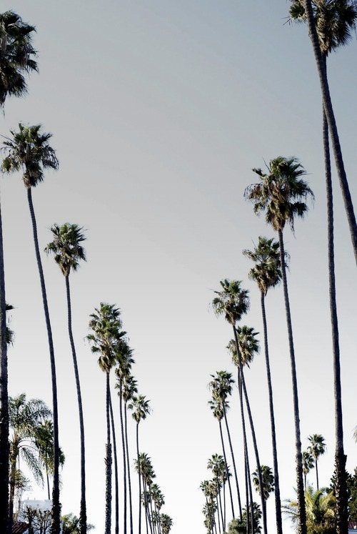 california Love Iphone Wallpaper : background, california, iphone wallpaper, trees, tumblr - image #2776953 by taraa on Favim.com