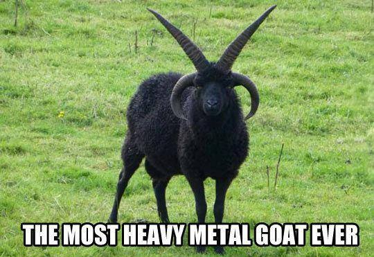 caption, ever, funny, goat, heavy metal, horns, most, rock music