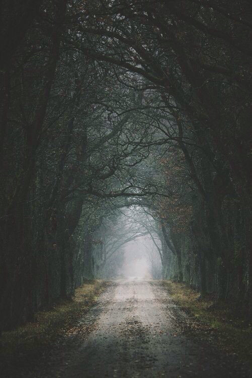 background beautiful dark foggy forest iphone road