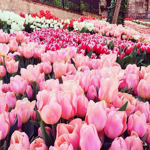 Beautiful bright colorful flower flowers seasons for Bright pretty colors