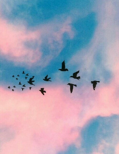 birds, blue, nature and pink