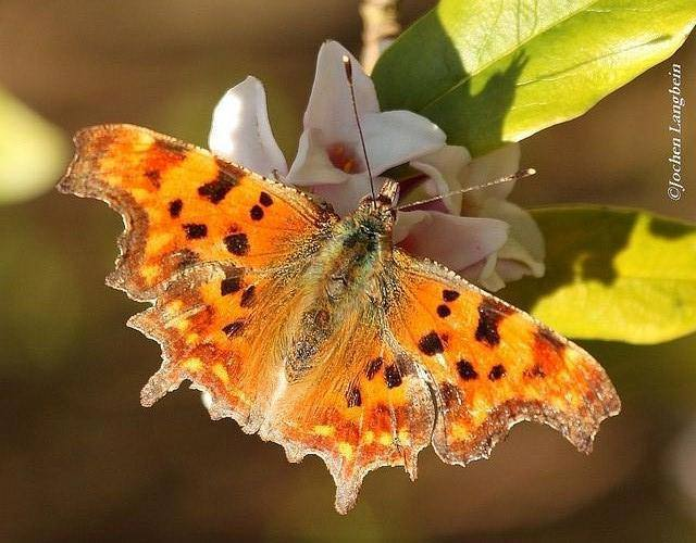 butterfly and insects