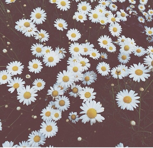 2015, chamomile and summer