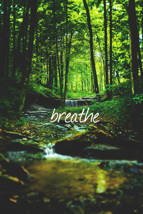 breathe - image #3110752 by LADY.D on Favim.com Dark Forest Green Hair