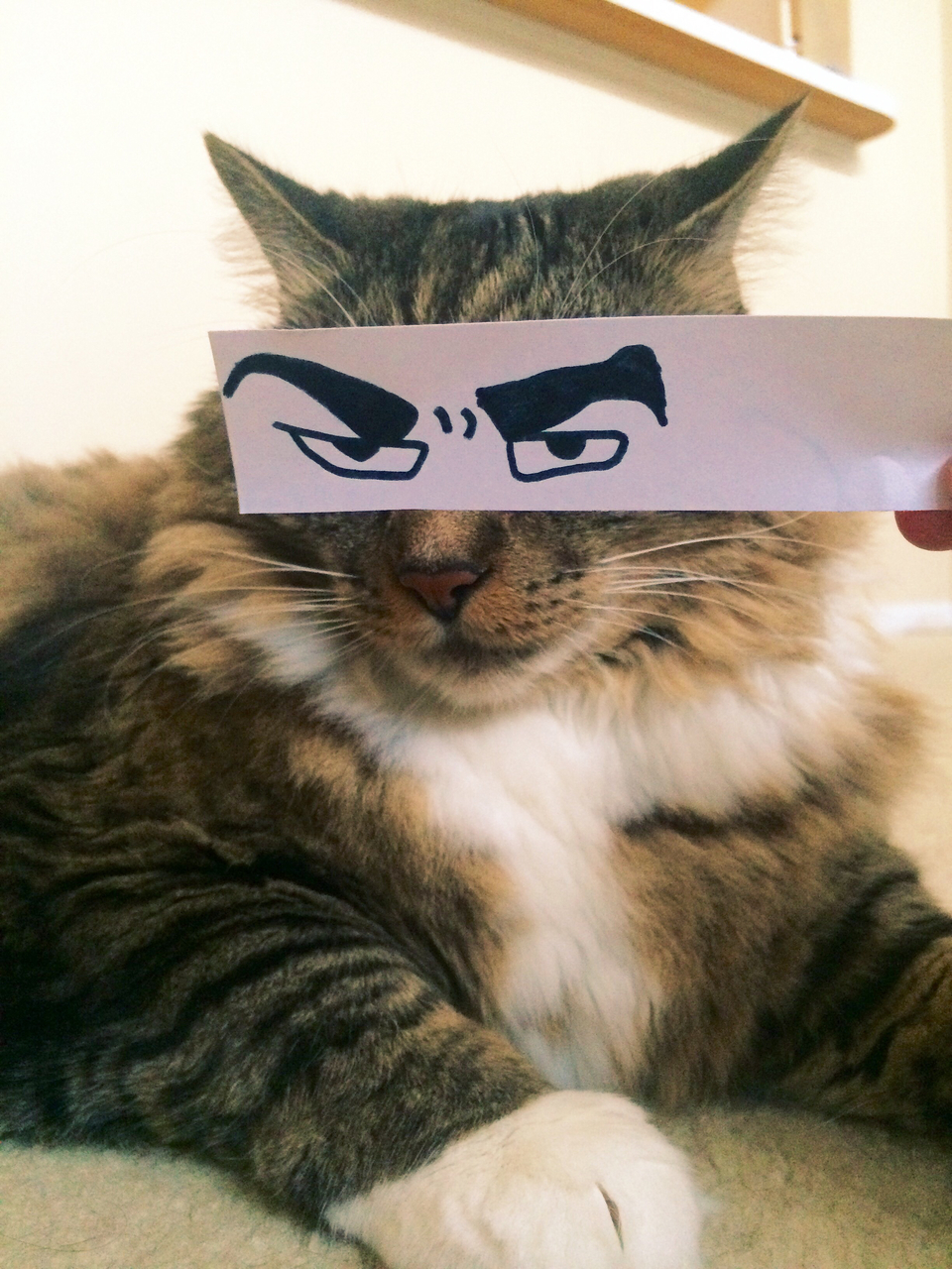 amazing, animal, art, awesome, beautiful, cat, chat, cool, cute, etes, eyebrows, eyes, fashion, funny, idea, ideas, idee, laugh, laughing, live, love, model, paper, papier, perfect, photgraphy, photo, pretty, style, summer, sweet, yeux, sourcils 
