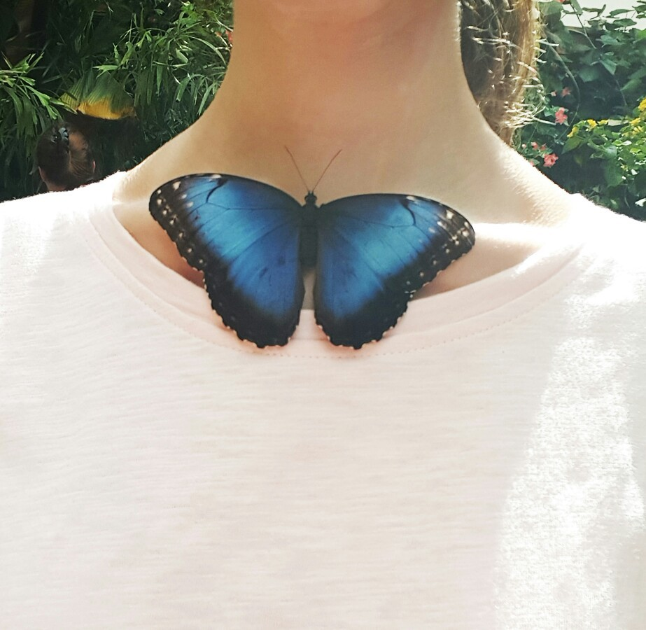 aesthetic, butterfly and insect