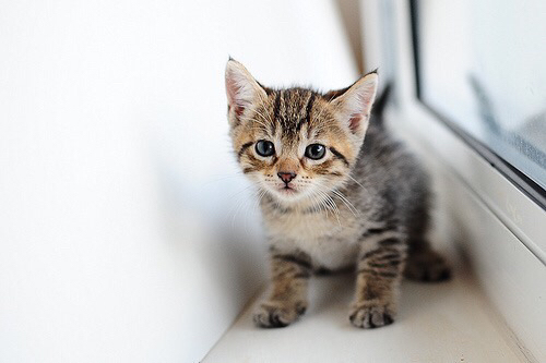 adorable, adorbs, animal and cat