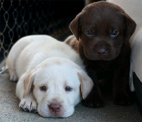 Cute black and brown dogs