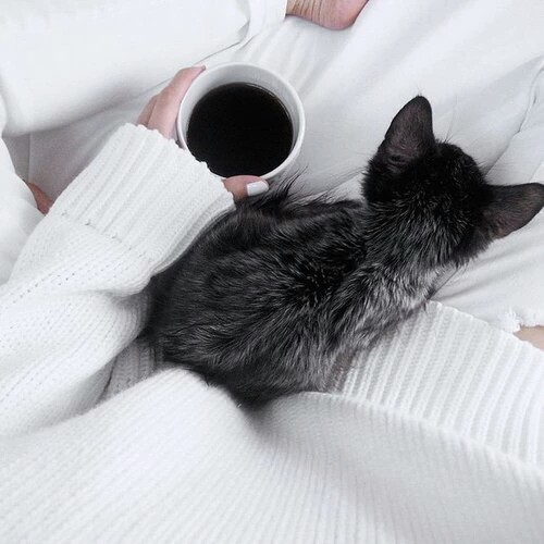 2015, animal, beautiful, beauty, black, body, cat, coffee, cold, cosmopolitan, elegant, fashion, free, freedom, girl, home, love, lovely, make up, nails, perfect, perfection, sweater, thin, vogue, weight, white, winter
