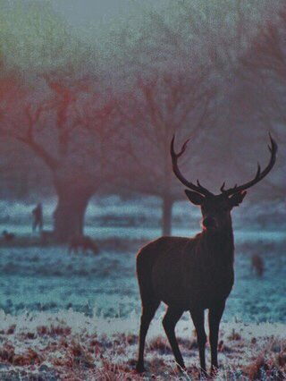 animals, awesome, beautiful, blue, dark, fog, hart, landscapes, lovely, mist, misty, morning, nature, photography, stag, stunning