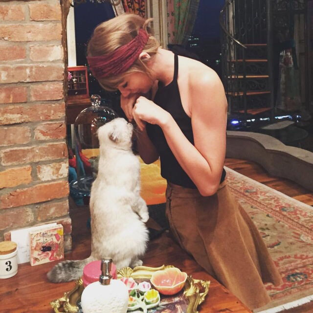 beautiful, cat, perfect and taylor swift