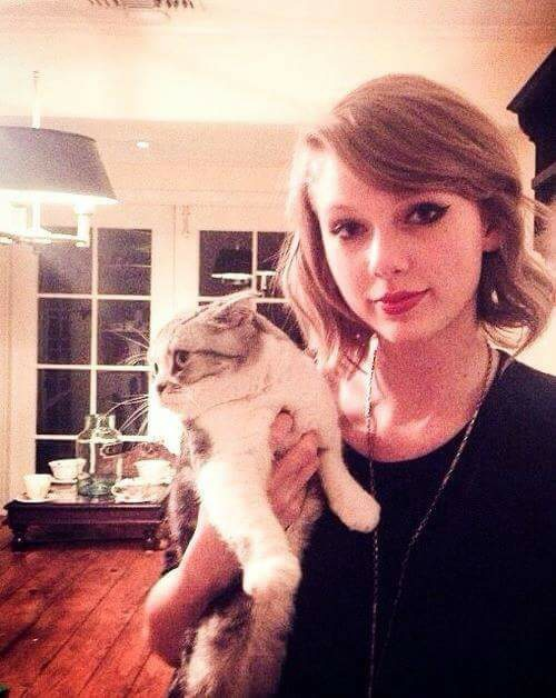 cat, swift, swiftie and taylor