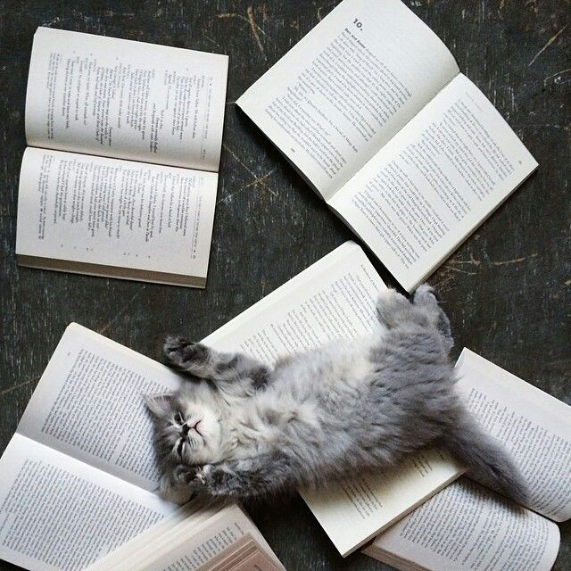 black and white, cat, read a book