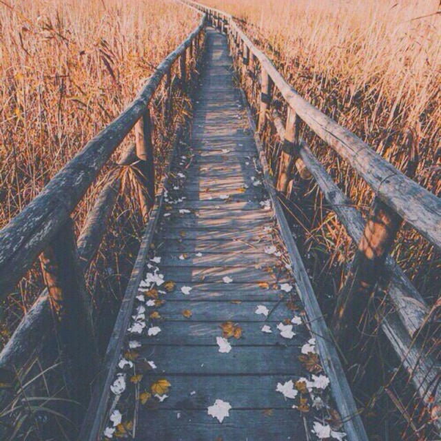autumn, boho, bridge, bright, brown, colors, fall, field, filter, flowers, girly, hipster, leaves, orange, pastel, red, summer, teen, tropical, tumblr, yellow