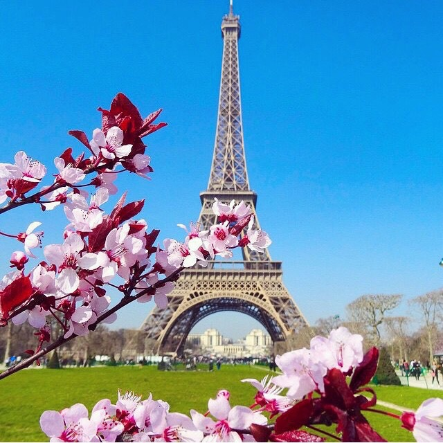 amazing, background, beautiful, beauty, blue, cute, eiffel, fashion, flowers, france, happy, hope, life, like, love, natural, nature, paris, perfect, pink, pretty, sky, style, summer, tower, tree, tropical, tumblr, wallpaper, we heart it