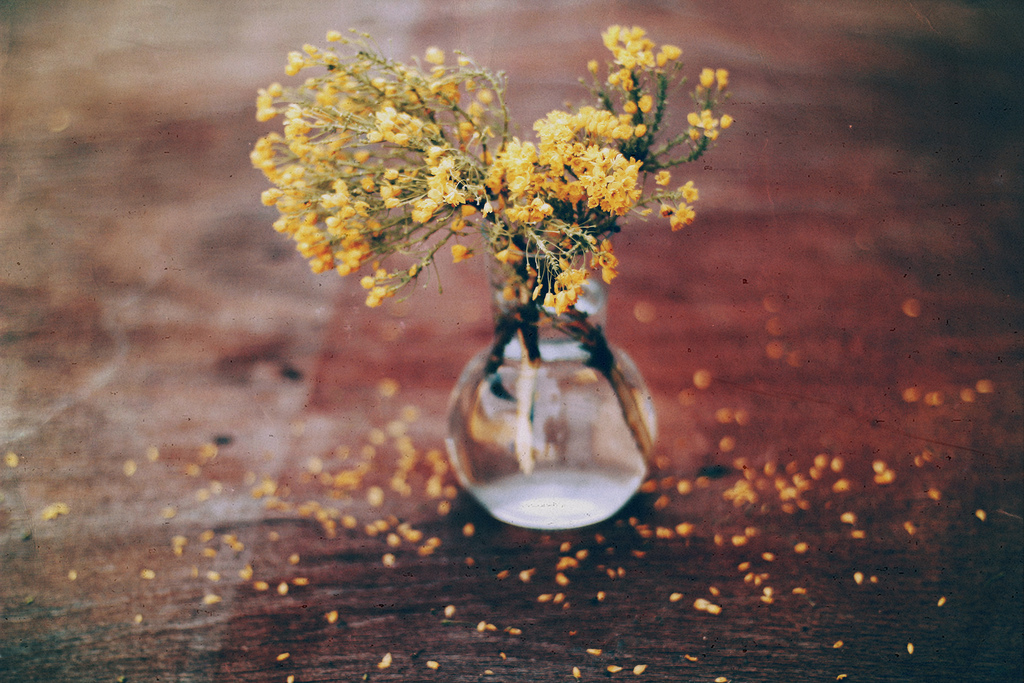flower, photography, vase, vintage, wood, yellow