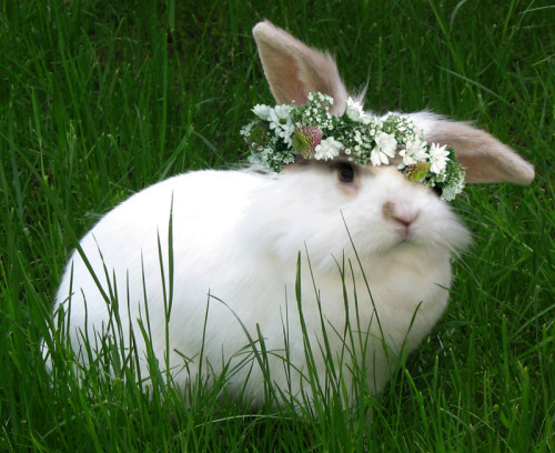 animal, animals, baby, bunny, cute, flower, flower crown, flowers, grass, green, love, lovely, natural, nature, rabbit