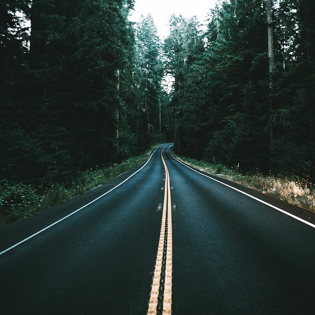 artsy, dream, forest, green, mystic, road, tumblr, woods