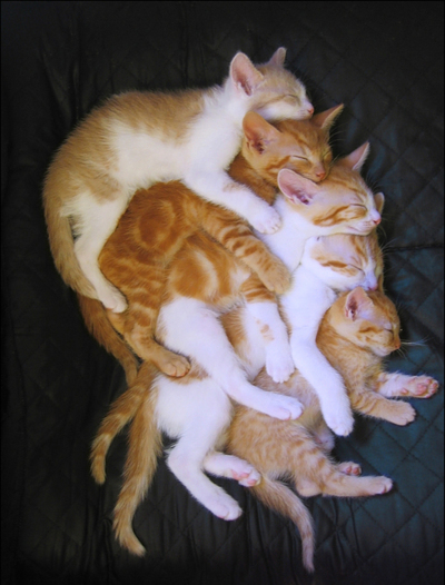 *--*, asleep, cats, cute, own