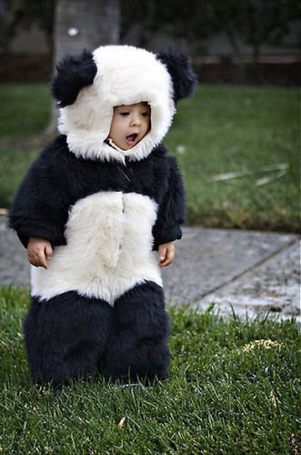 adorable, adoreable, aww, baby, bear