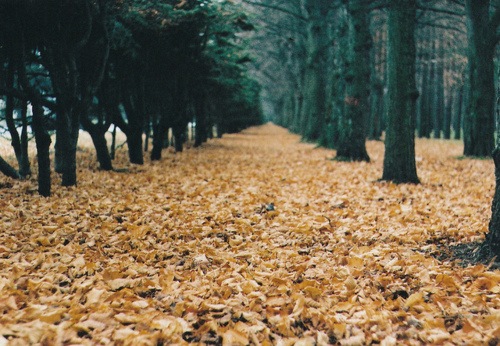 alley, autumn, beautiful, fall, leaves
