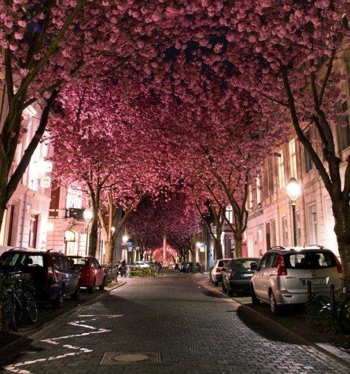 amazing, beautiful, flowers, night, pink, street, tree, wow