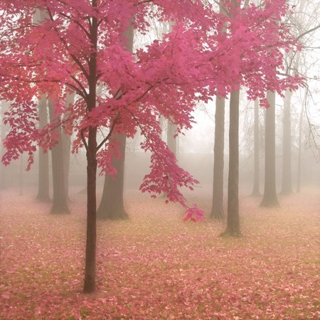 autumn, beautiful, blossom, forest, photography