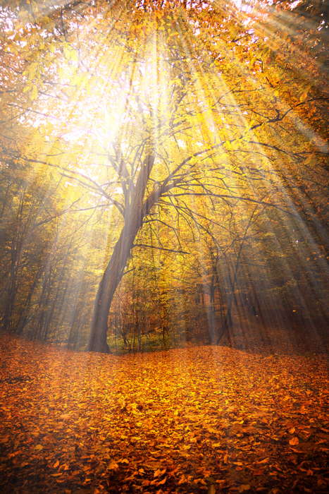 autumn, beautiful, fiary tale, forest, light