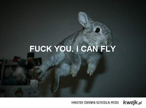 awesome, bunny, can, cute, fly, fuck, fuck you i can fly, kwejk, lovely, rabbit, rubbit, sweet, words, you