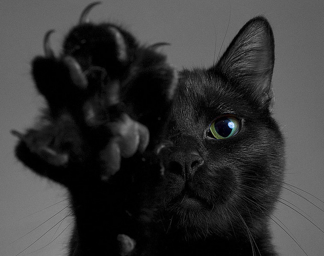 black cat, black cats, cat, cat claws, cat paw