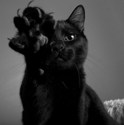 black cat, black cats, cat and cat paw