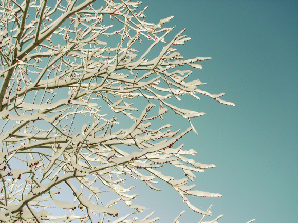 blue, branch, sky, snow, sun