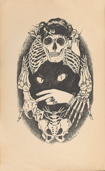bones, cat, etching, skeleton, skull