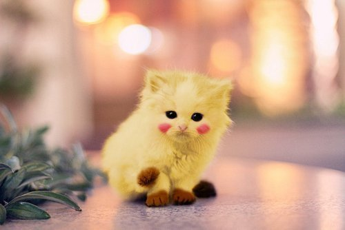 cat, cute, kawaii, love, picaxu
