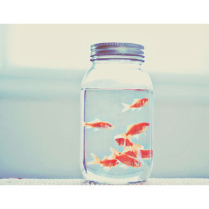 cute, fish, goldfish, jar, nature, water, window