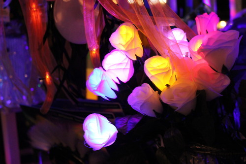 disney, flowers, lights, nature, plants