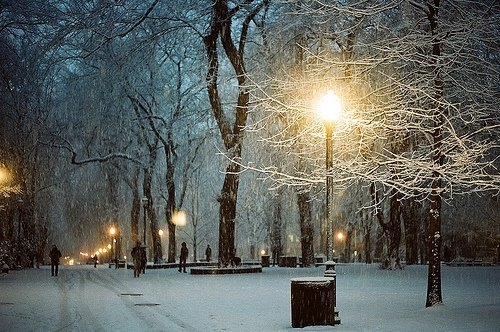 frozen, lights, night, park, snow