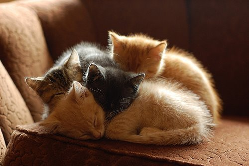 adorable, cat, cats, cute, kitten, kittens, sleeping, sweet
