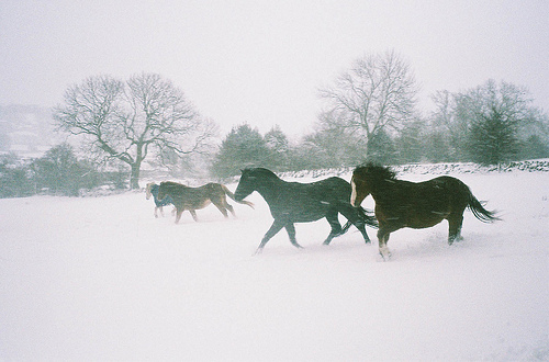 animal, forest, horse, horses, nature