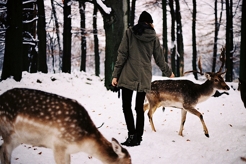 animals, bokeh, deer, delicate, forest, girl, indie, snow, winter